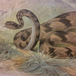 4 tableau educatif les serpents