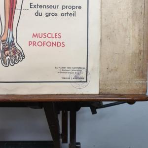 5 affiche anatomie 8