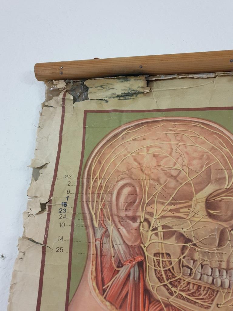 5 grande affiche anatomique