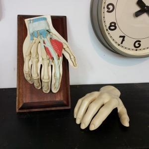 5 main d etude medecine