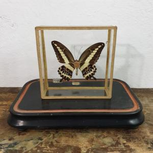 5 papillon 2