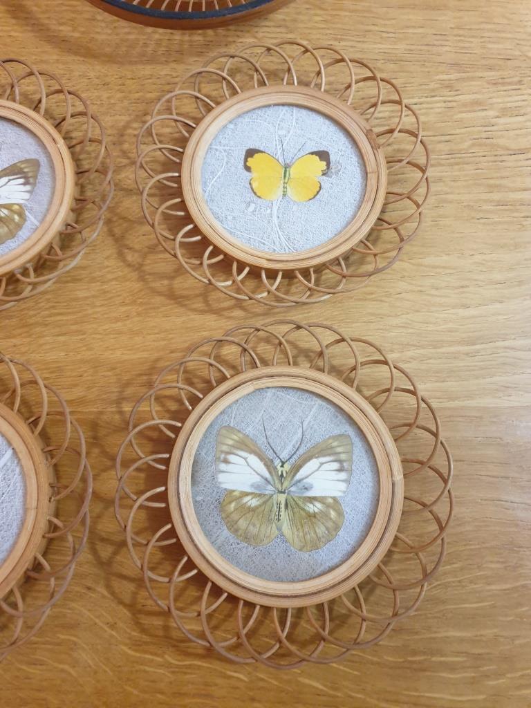 5 sous verres papillons