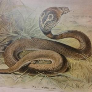 5 tableau educatif les serpents