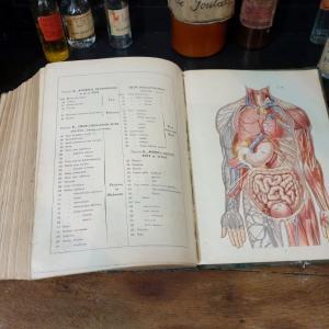 7 larousse medical illustre
