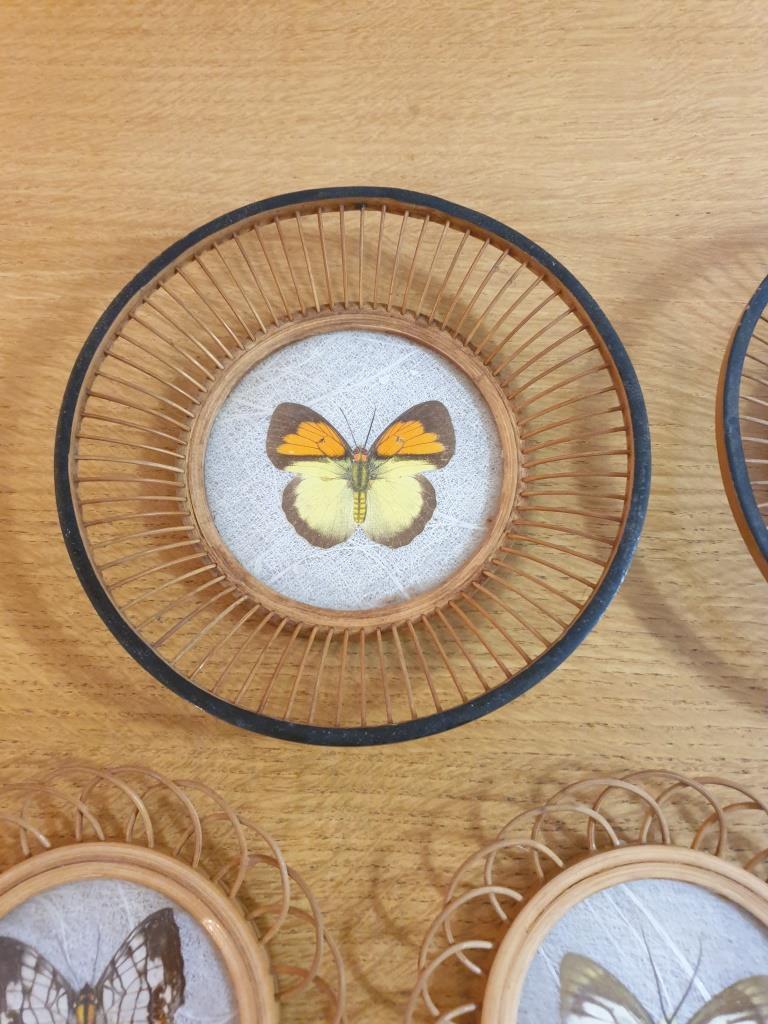 7 sous verres papillons